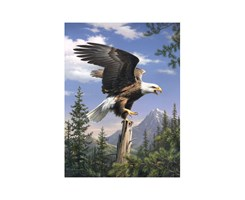 SMALL ART COLL PBN SCREAMING EAGLE